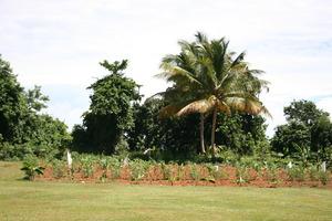 Vegetable garden (part)