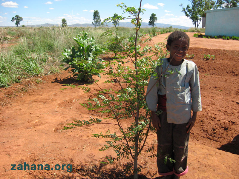 Help reward one woman's reforestation efforts