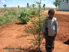 Help reward one woman's reforestation efforts