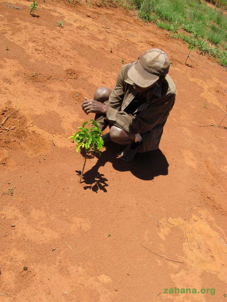 Help reward one man's reforestation efforts