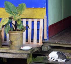 1. Cat at Pebas dock