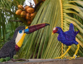 Channel-billed toucan and purple gallinule models