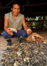 Man from Ancon Colonia with dry copal resin lumps