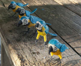 Blue and gold macaws at teacher workshop