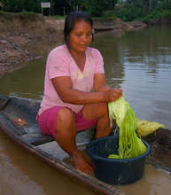 Artisan washing chambira fiber. Plowden/CACE