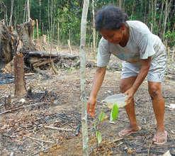 Bora woman watering rosewood tree seedling