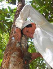 Italo harvesting resin lump from copal tree