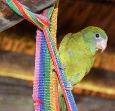 Pet parakeet in artisan home