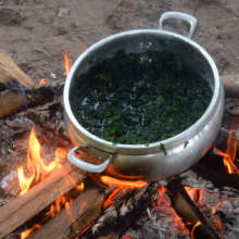 Cooking green dye plant