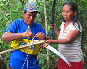 Bora artisan using pruning saw to harvest chambira
