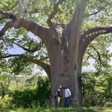 Baobab, known as The Story Tree -with lots to tell