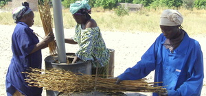 APRO-ECO testing sesame straw in Belaba