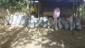 Bio-char in Moundou