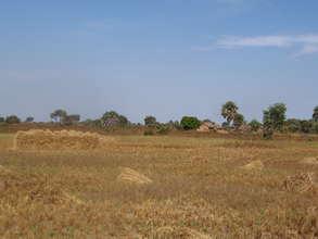 Rice Fields in Nya