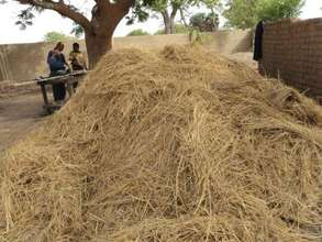 Rice straw ready for the kiln