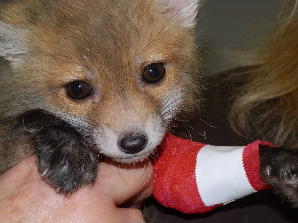 Help Give Wildlife a Second Chance