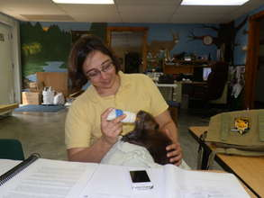 Our Vet Jessica feeding Infant Beaver