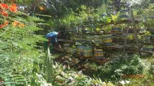 The centre's urban vegetable garden