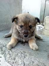 another one of the puppies you helped