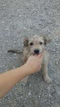 puppy rescued from street, already adopted