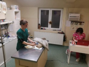 Marshmallow with vet tech Ruth