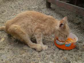 kitty receives food