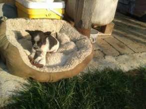 dumped bucket puppy now at happy paws