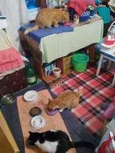 kitties in foster getting food