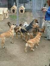 Feeding Moreni dogs