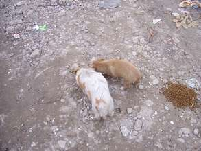 starving puppies being given food