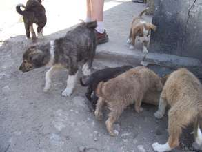 abandoned puppies getting fed