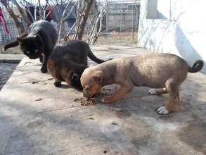 Many puppies dogs cats and kittens need your help