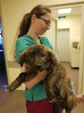 puppy with babesi treated at Center of Hope