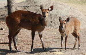A year food for Maxi & Mini our Bushbucks