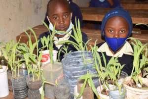Seeds need water to grow!