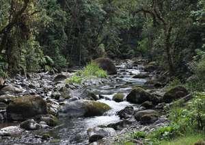 Savegre tributary