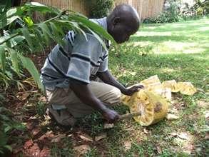 Fred cutting jackfruit