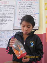 Science experiments for Ecology