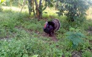 beatifull Turkey at site