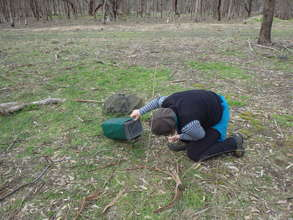 Volunteers checking traps
