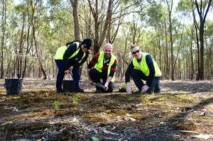 Volunteers planting grasses