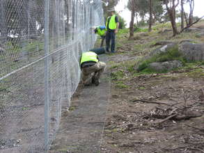 Volunteers installing protective fence