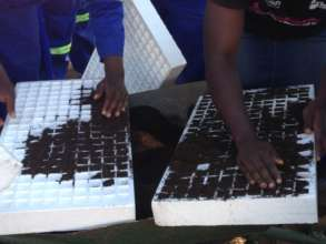 Girls Preparing Trays for Seedlings