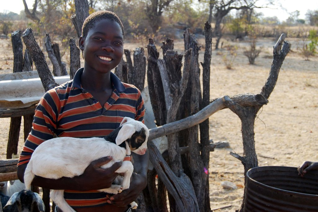 Goats for 145 AIDS Orphans