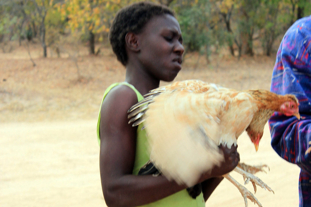 Chickens and a Dream for AIDS Orphans