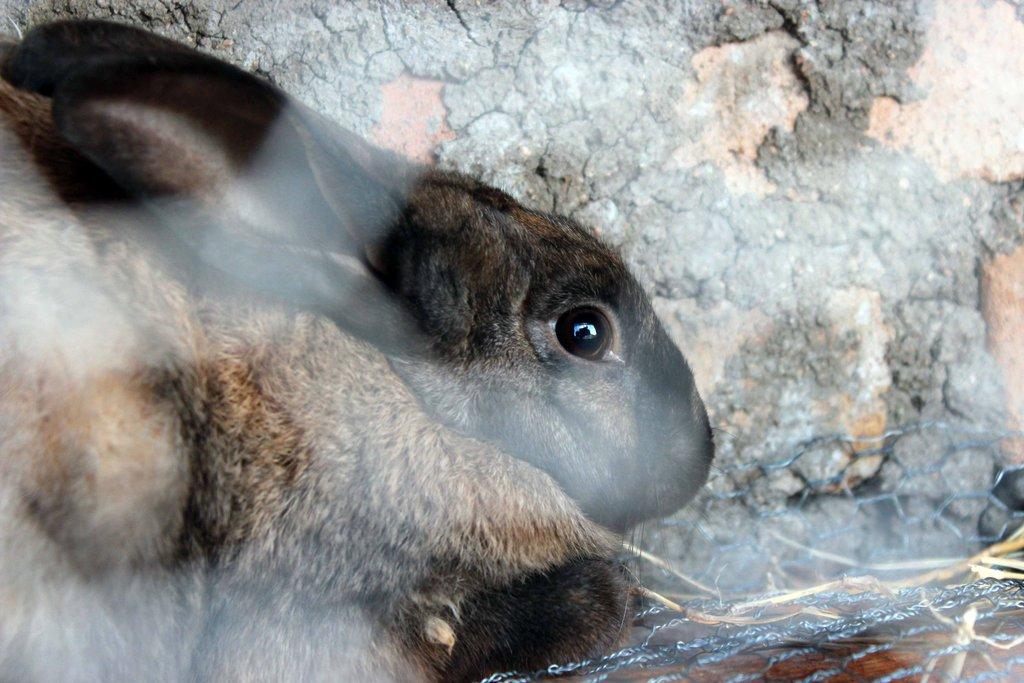 Rabbits, Rabbits and More Rabbits for Orphans