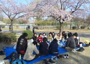 Party under cherry blossoms