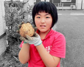 She is conducting a research on potatoes