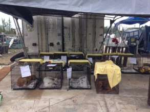 Spay/Neuter at the Nassau Landfill