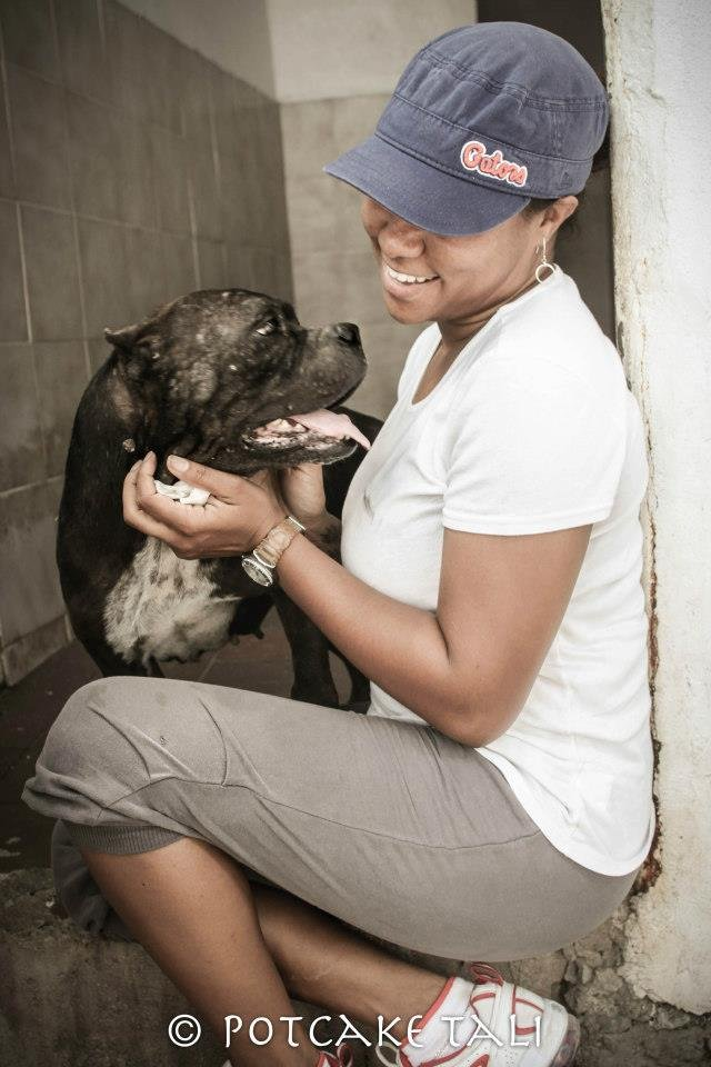 Spay/Neuter 2,000 Stray Dogs & Cats in The Bahamas